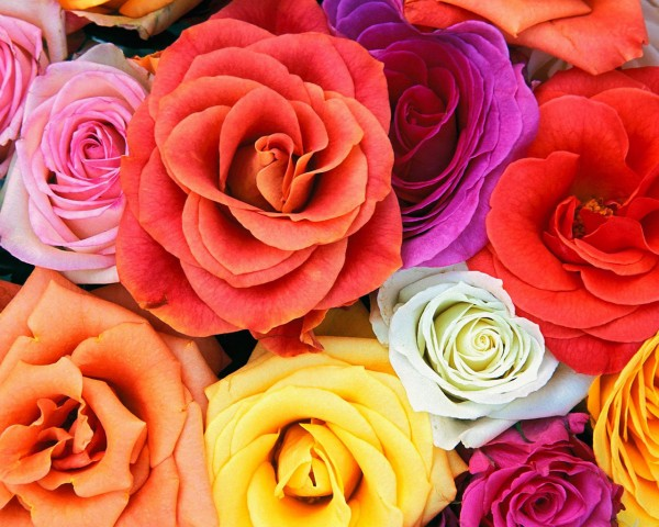 Love_Blooms_Roses_Bunch_Of_Flowers